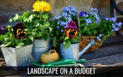 Landscape on a Budget